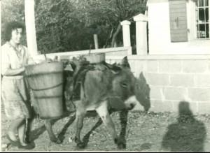 Donošenje vode na magarcu