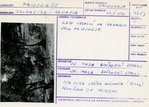 Folklorna građa iz Konavala 2, 1961.: Kate Veselić na magarcu, selo Pridvorje.
