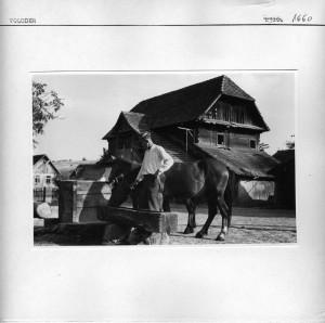 Seljak napaja konje.