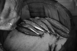 Festival mediteranske prehrane 2016. (tema srdela i vino), radionica soljenja srdela, Vrboska, 6. 7. 2016.: Radionica soljenja srdela, slaganje u baril.