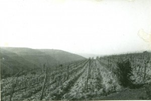 Pogled na vinograde