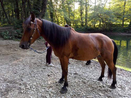 Konj iz konjaničkoga kluba, akcija Ljubav za Ričinu