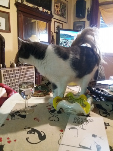 Cicy, mačkoprijateljica Branka Sušca