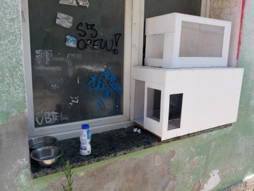 sklonište za ulične mačke, Pula
