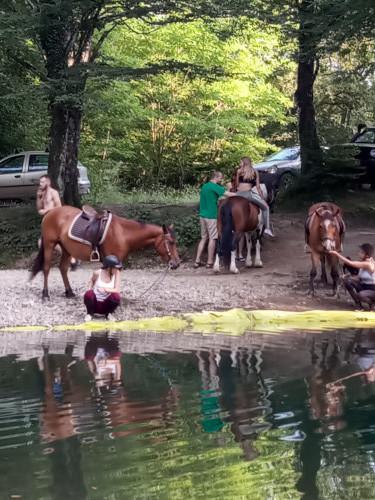 Konji iz konjaničkoga kluba, akcija Ljubav za Ričinu