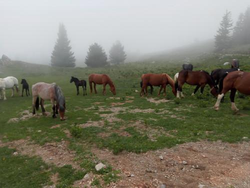 Konji na Velebitu