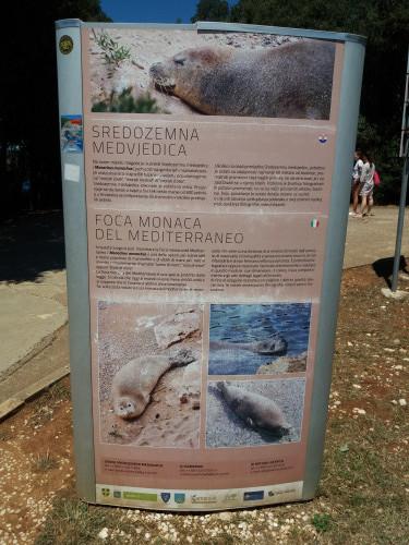 Info-plakat o sredozemnoj medvjedici, Verudela, Pula