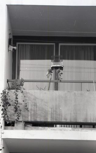 Travno u Zagrebu; Ugažene staze preko travnjaka, cvijeće na balkonima.